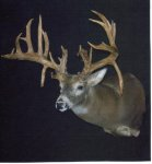 jefferson co buck (Small).jpg