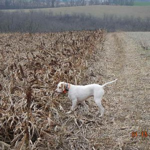 Pheasant Hunt Jan 15, 2016 Dave Roberts 2016 01 15 005